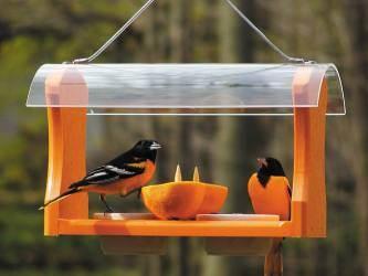 birdscaping2