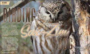 Sax-Zim Bog Birds