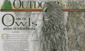 Artic Owls newspaper
